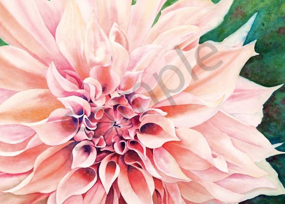 Cafe Au Lait dahlia watercolor print available in paper, metal, acrylic, canvas or wood by Beth Owen.