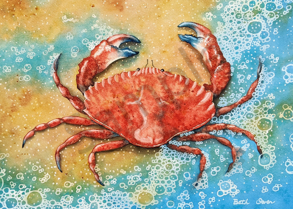 Red Rock Crab watercolor print available in paper, metal, acrylic, canvas or wood by Beth Owen.