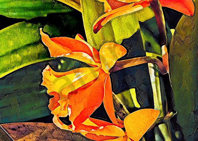 Orchids Orange  Photography Art | Images by Louis Cantillo