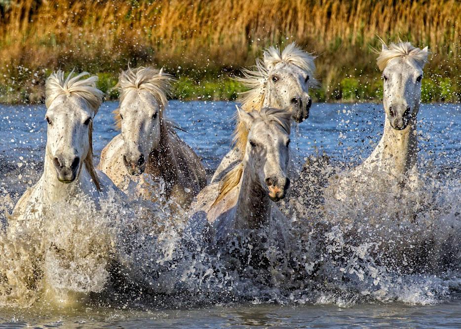 Marsh Madness Photography Art | John Martell Photography