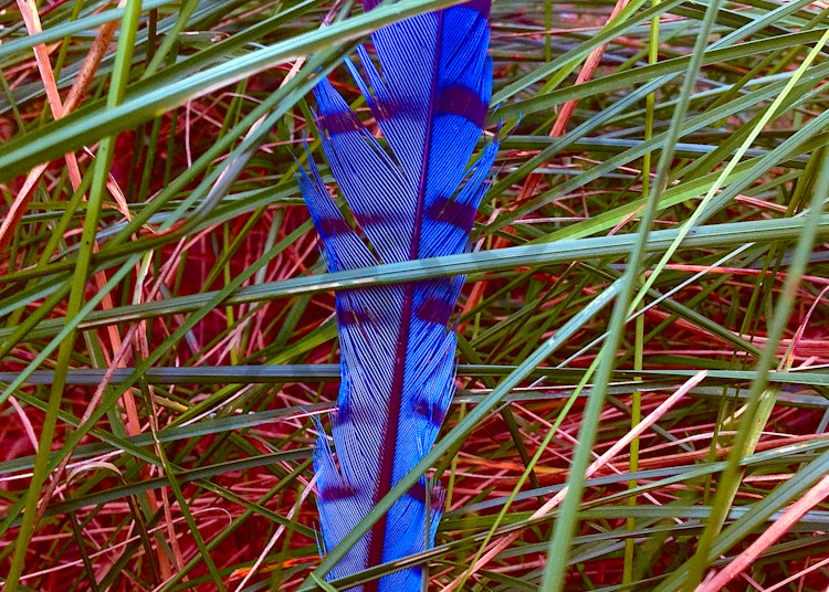 Feather In Grass|Fine Art Photography by Todd Breitling