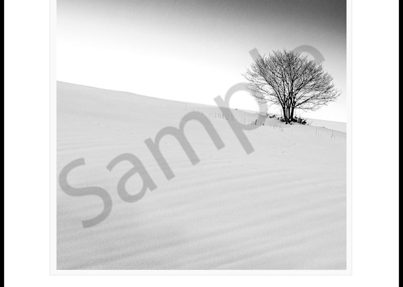 Sloping Tree Art | Roy Fraser Photographer