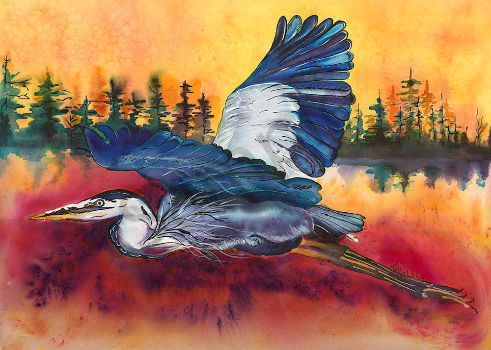 """Great Blue Heron at Sunrise"" fine art print  by Kelly Wolske."