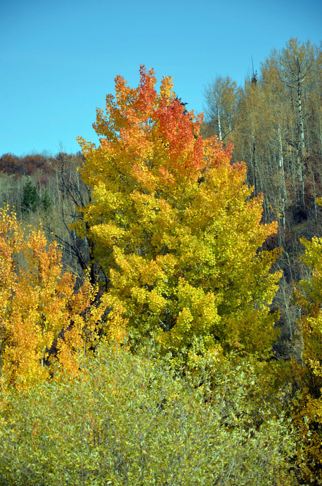 swan valley idaho fall colors
