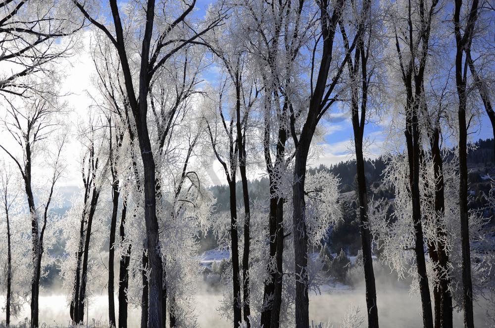 frosty-morning.jpg
