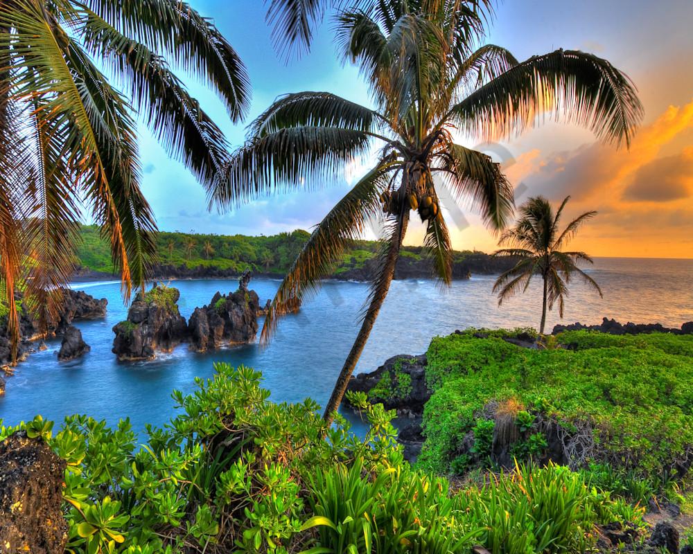 Hawaii Fine Art Photography Where Coconuts Grow By Randy