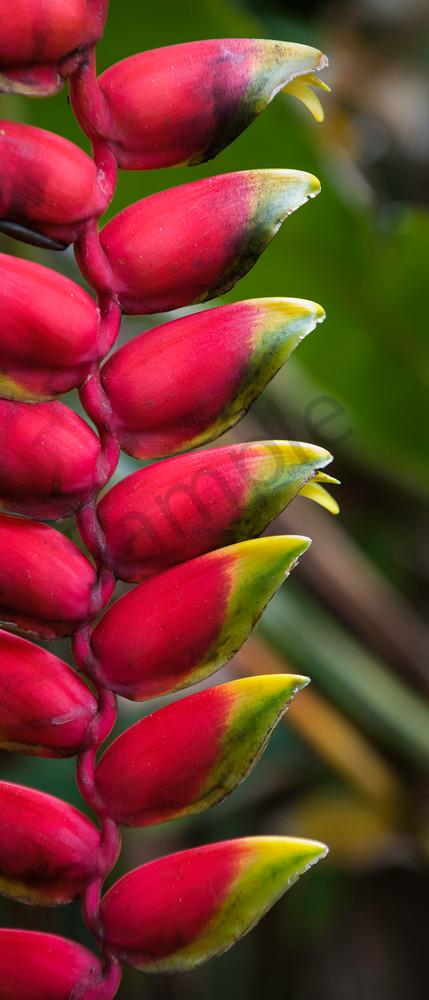 Hawaii Fine Art Photography Maui Tropicals By Randy J Braun
