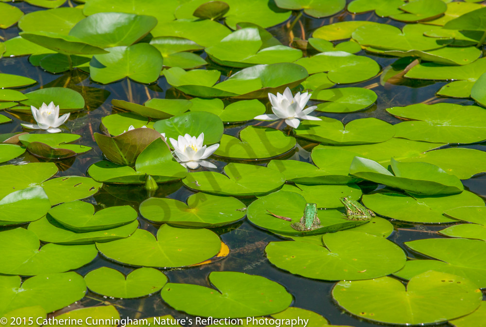 www.naturesreflection.org