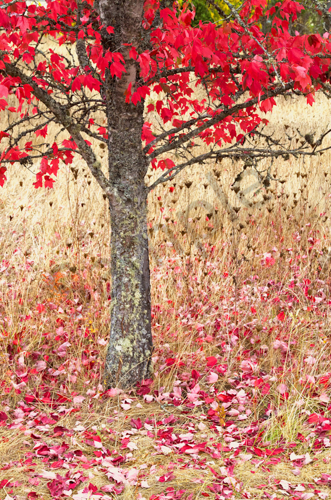 an image of bright fall colors with leaves on the ground at elijah bristow state park