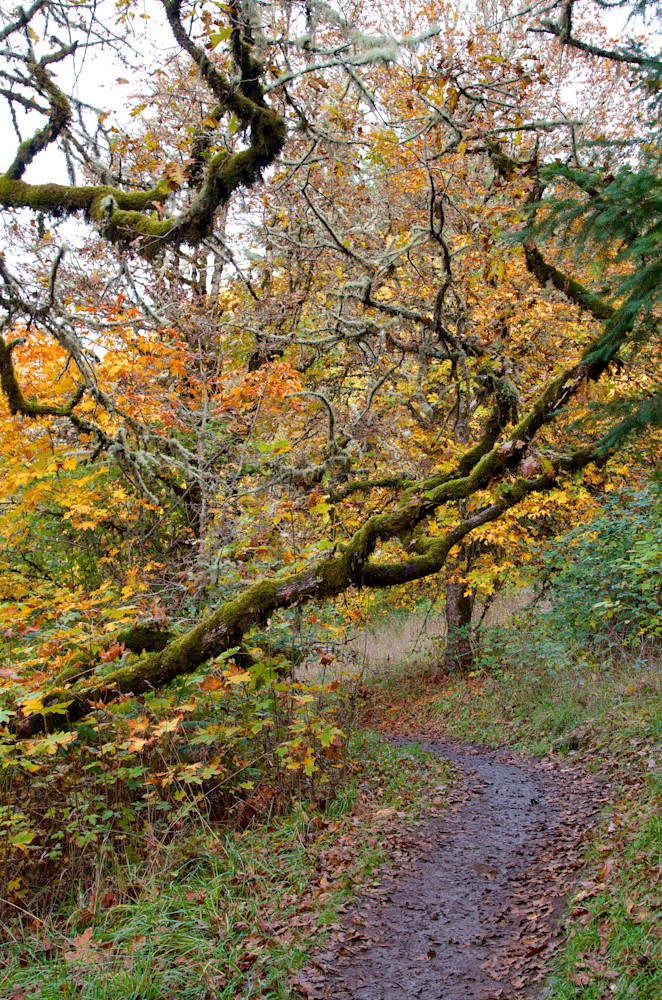an image of fall color and moss covered trees on a trail on mount pisgah