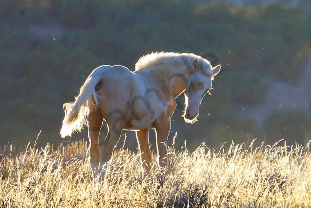 1396-Wild Mustang-Sand Wash Basin
