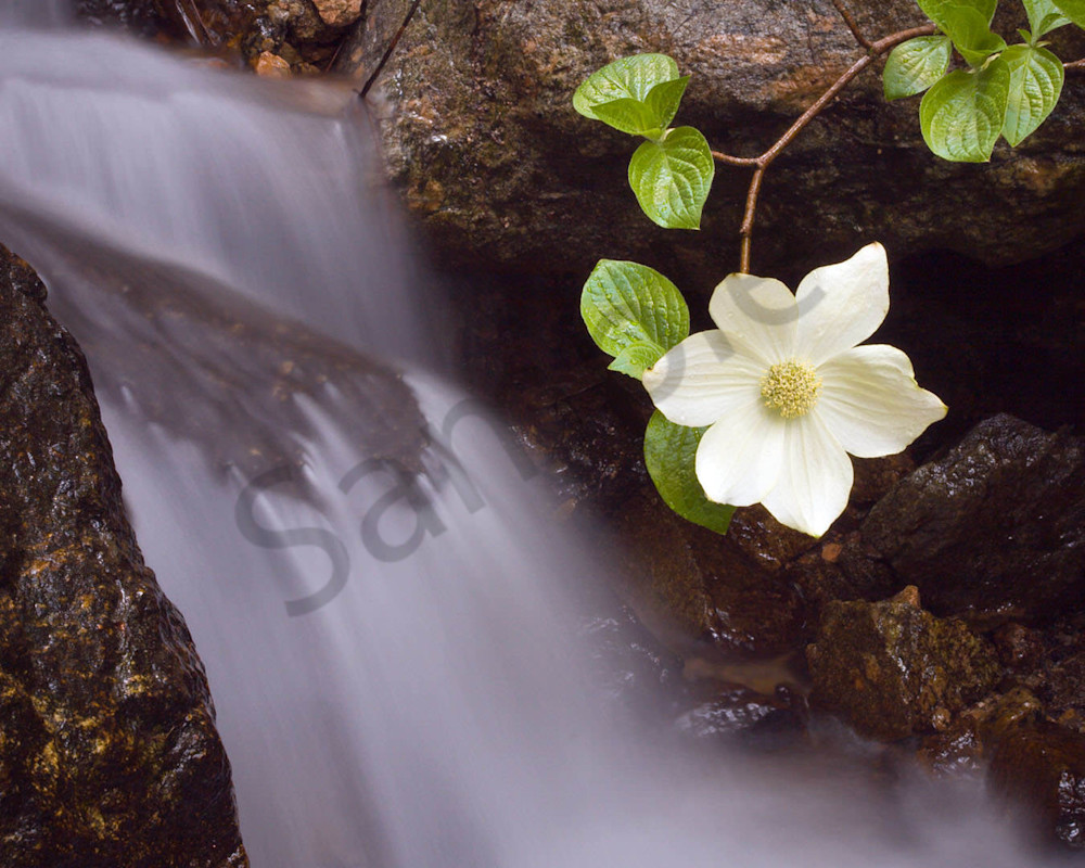 Dogwood Falls Photography Art | Scott Cordner Photography