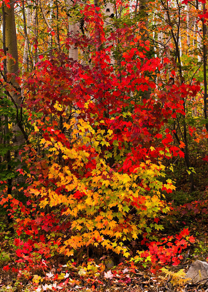 Fall Explosion Art | Scott Cordner Photography
