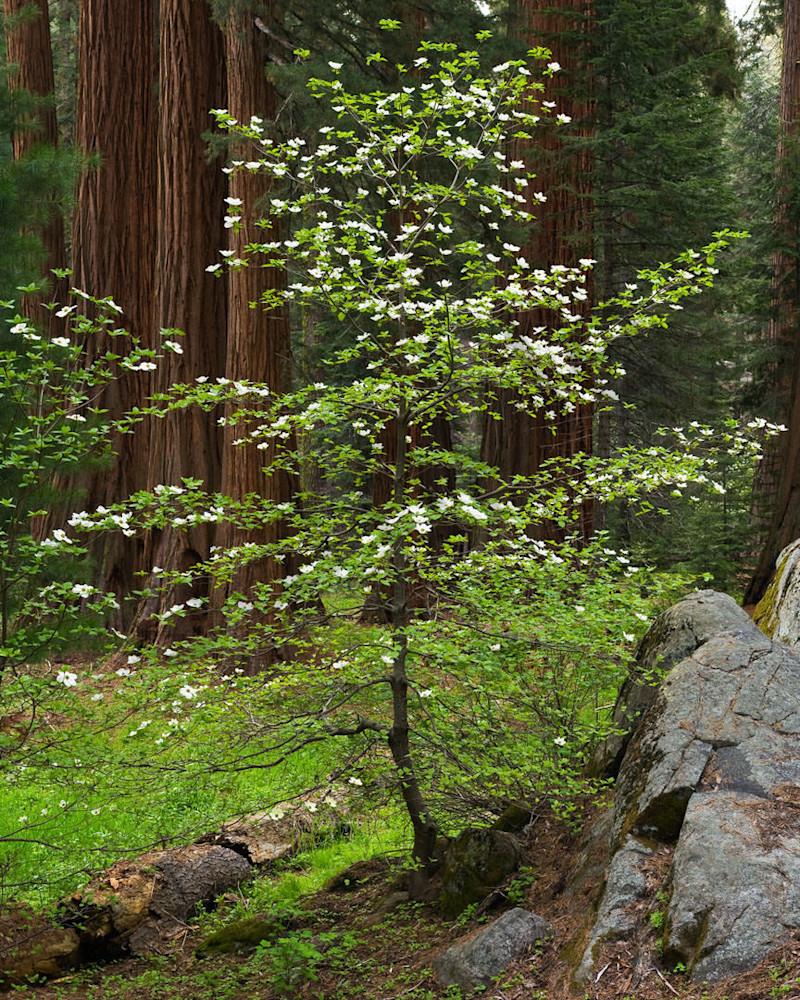 Forest Elegence Photography Art | Scott Cordner Photography