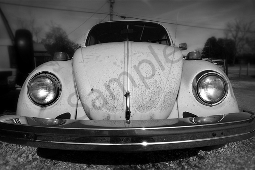 Bug Photography Art | Robert Jones Photography