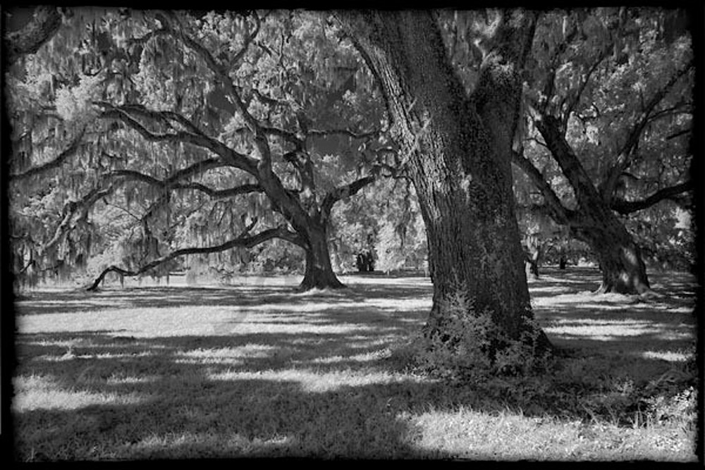 Broadfield Plantation No. I Photography Art | Robert Jones Photography