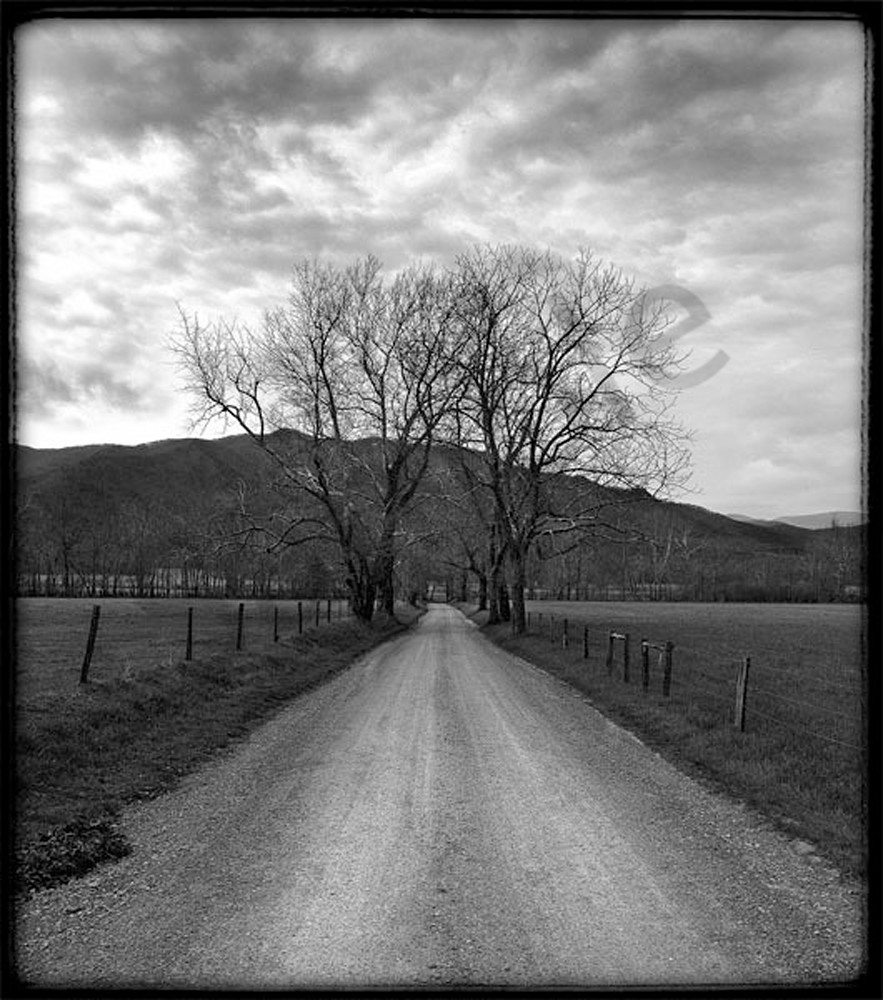 Cades Cove Tree No. II