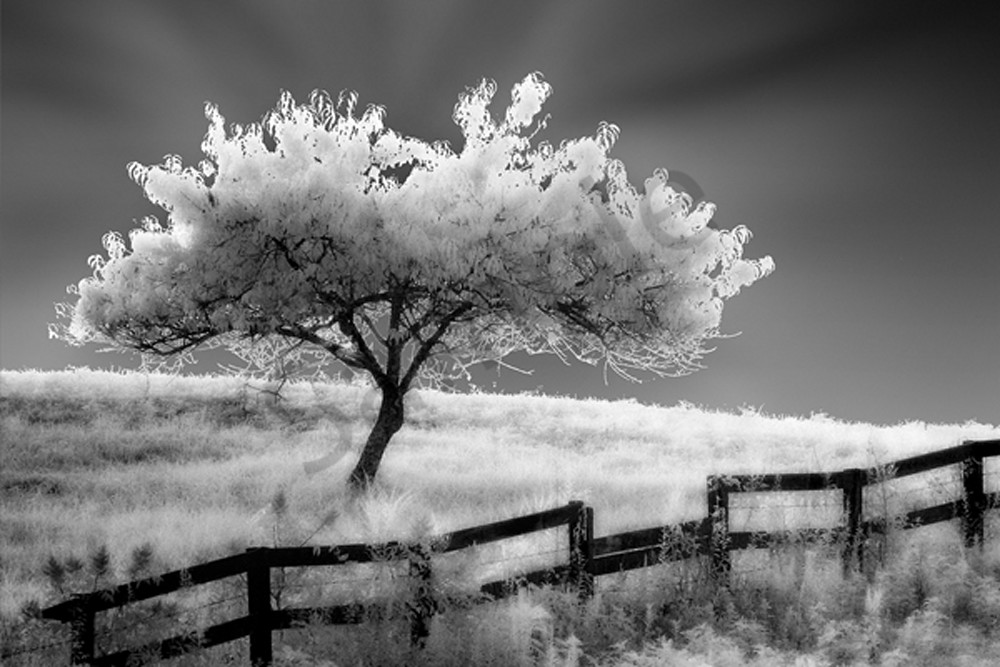 Ethereal Tree Photography Art | Robert Jones Photography