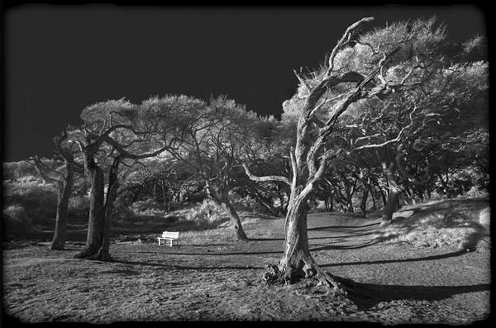 Windswept Photography Art | Robert Jones Photography
