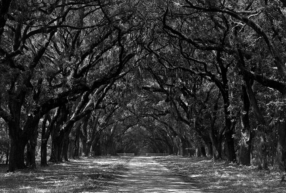 Wormsloe Plantation Photography Art | Robert Jones Photography