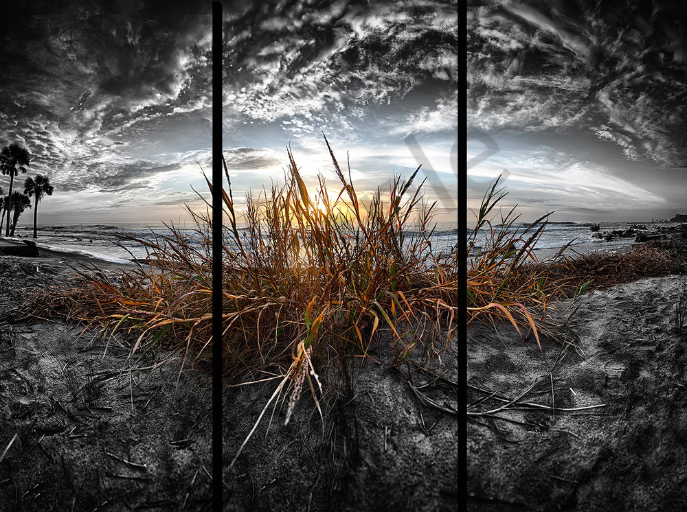 Sea Oats - Trip Tych