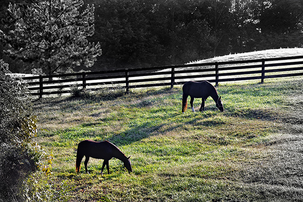 Out To Pasture Photography Art | Robert Jones Photography