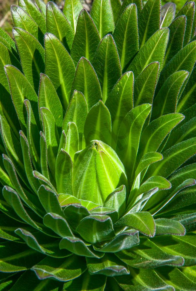 Succulent Light
