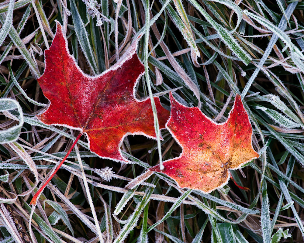 First Frost Photography Art | Scott Cordner Photography