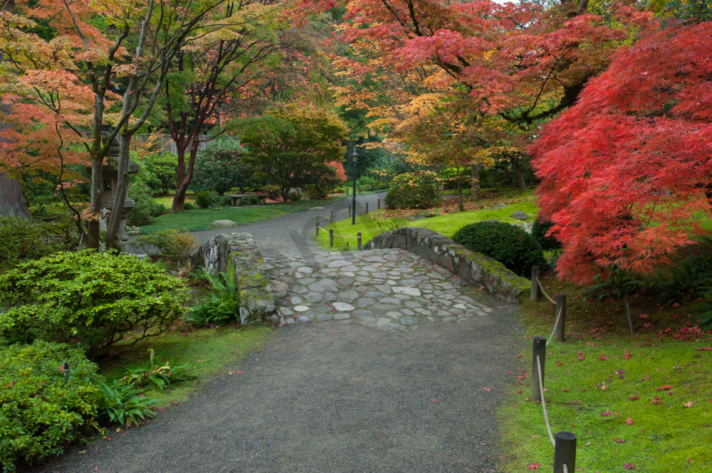 Fall colors in the Japanese Garden in the University of Washington Arboretum, Seattle, Washington