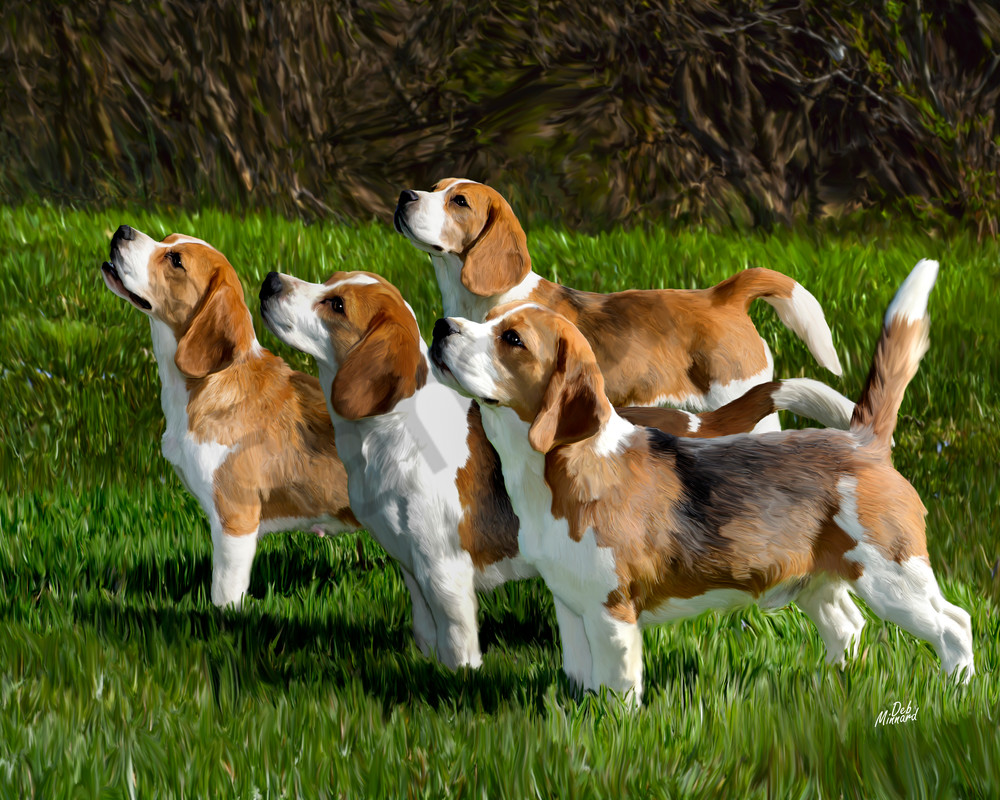 top four beagles