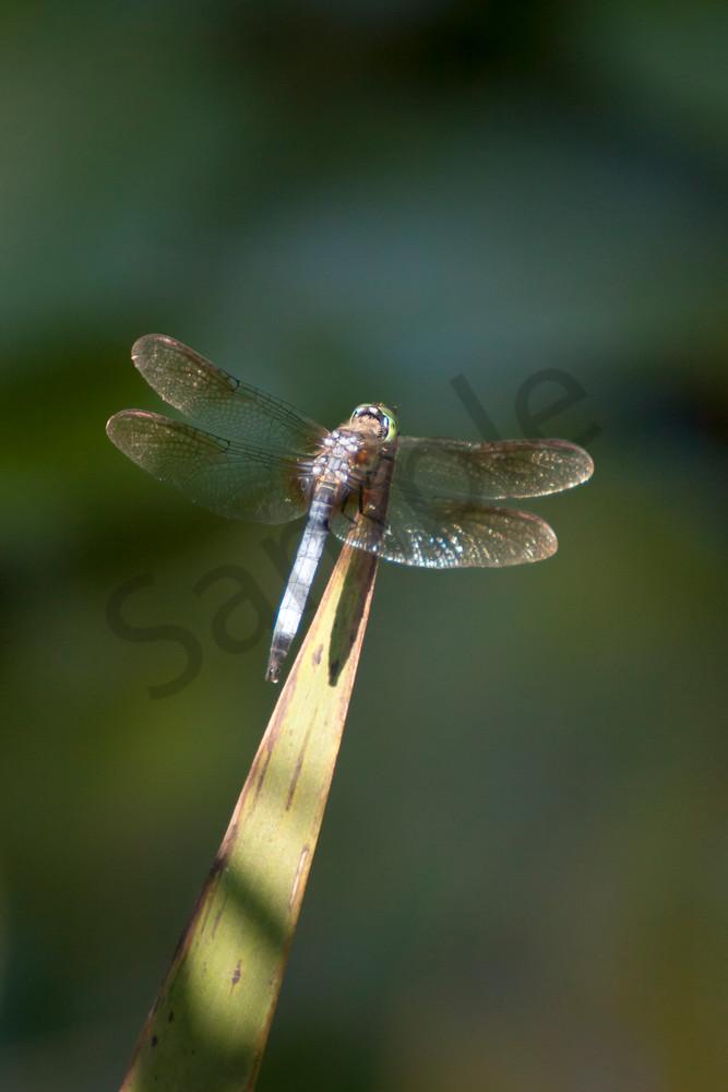 Garden Wall Art: Dragonfly
