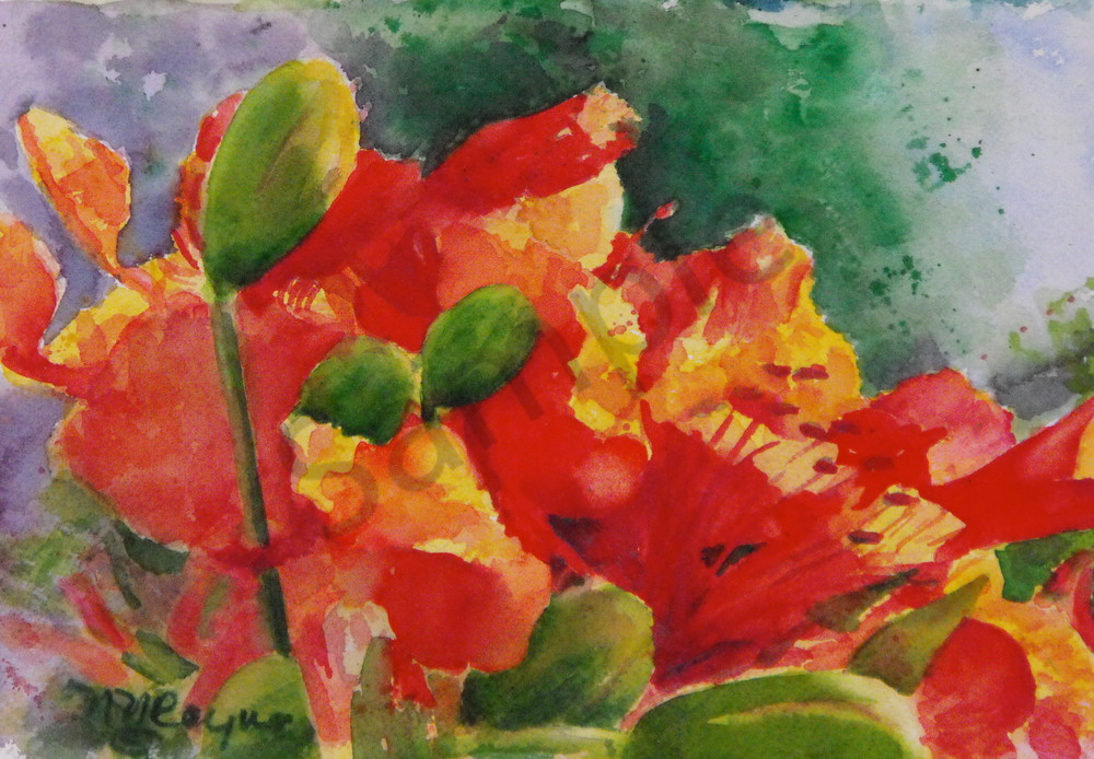 Poinciana Art for Sale