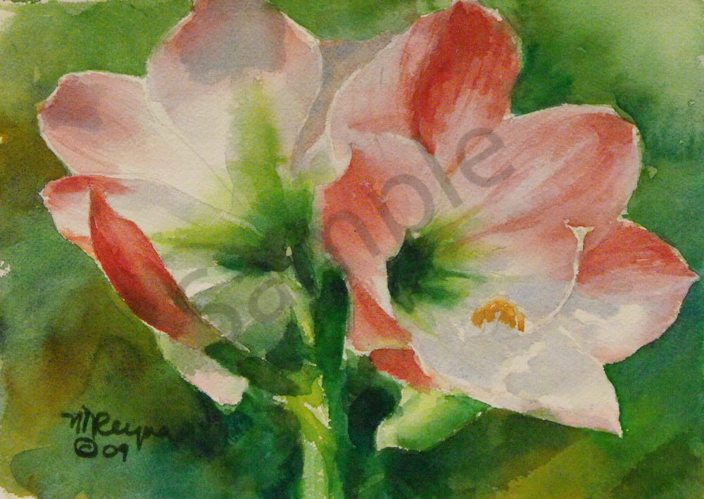 Amaryllis Art for Sale