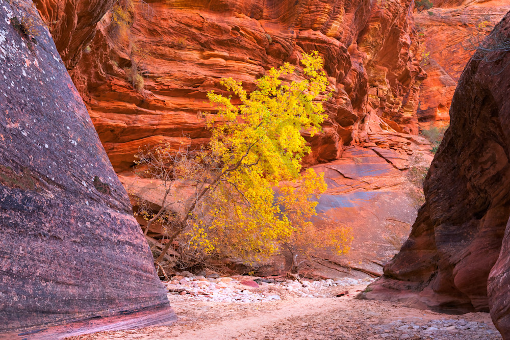 The Light of the Canyon