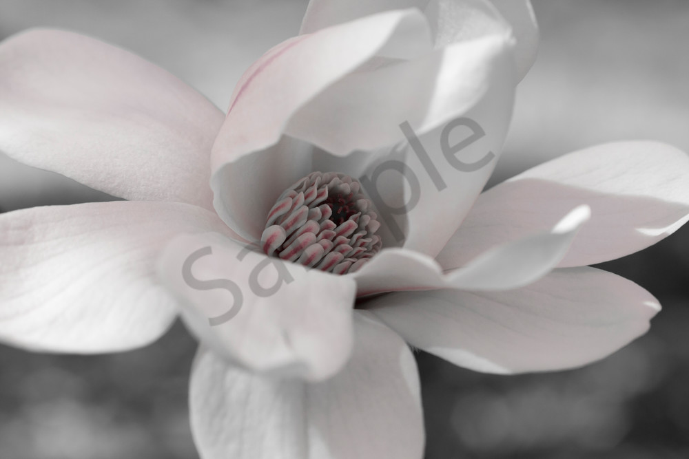 Flower Wall Art: Star Magnolia