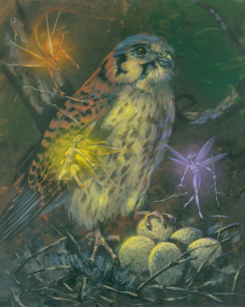 Kestrel Nest