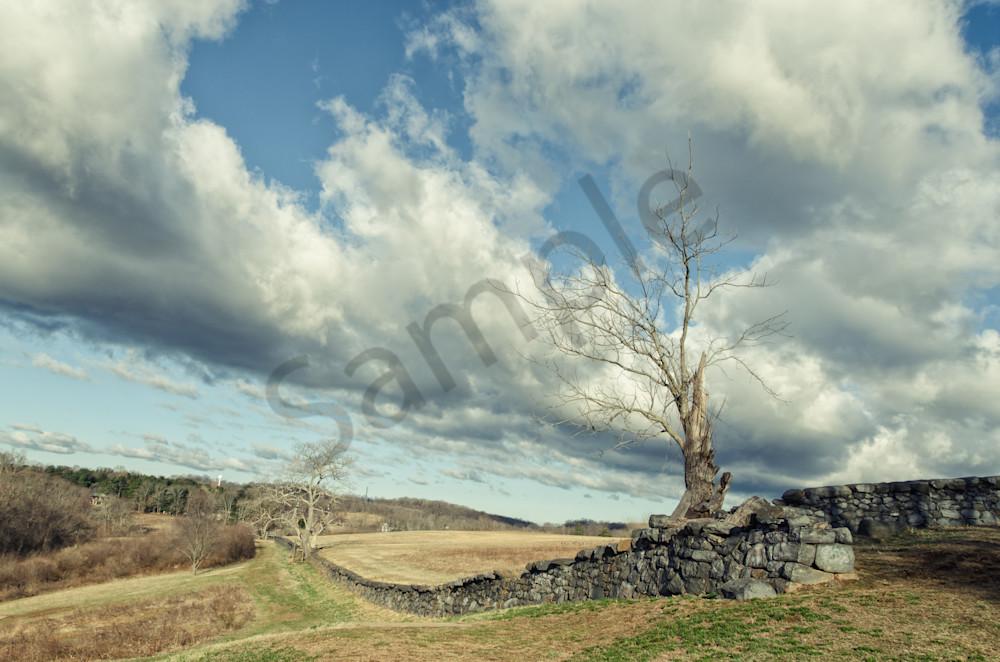 Dead Tree and Stone Wall Split Toned Landscape Photo Wall Art by Landscape Photographer Melissa Fague