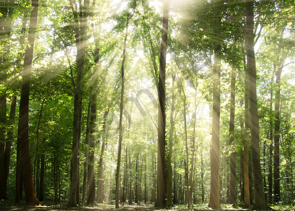 Sun Rays through Tree Tops Landscape Photo Wall Art by Landscape Photographer Melissa Fague