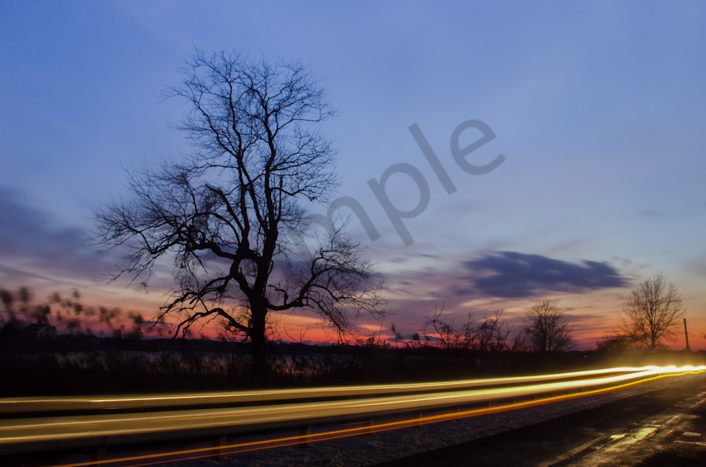 Wicked Tree Landscape Photo Wall Art by Landscape Photographer Melissa Fague