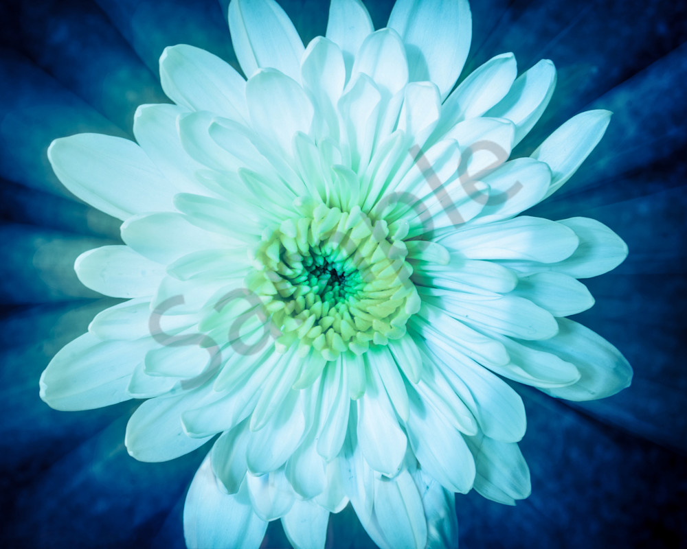 Brilliant Flower Nature Photo Wall Art by Nature Photographer Melissa Fague