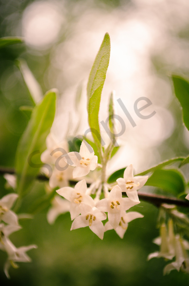 Floral Tranquility Nature Photo Wall Art by Nature Photographer Melissa Fague