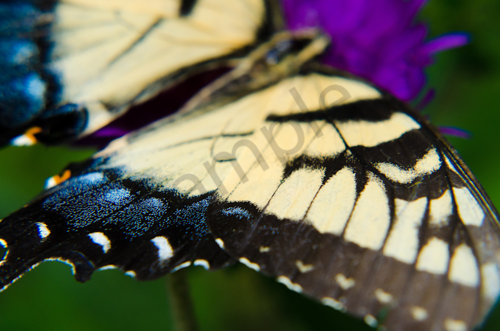 Butterfly Wings Wildlife Photo Wall Art by Nature Photographer Melissa Fague