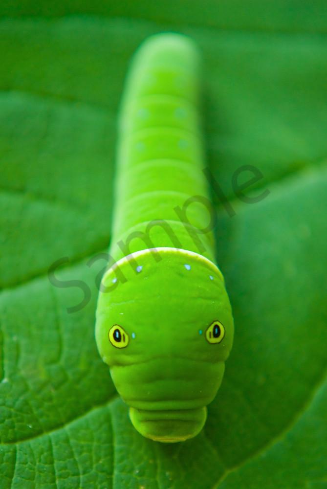 Hidden Caterpillar Wildlife Photo Wall Art by Nature Photographer Melissa Fague