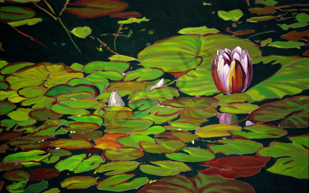 Lily Pad Special - Sherry Nielsen - Smithers BC