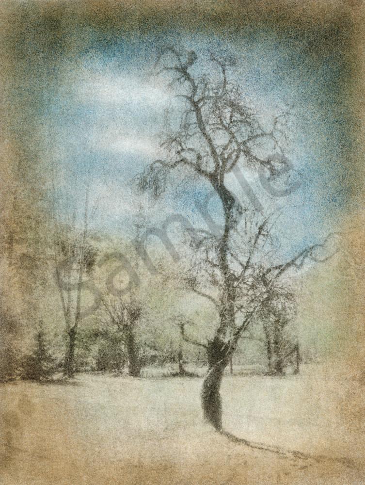 The Dancing Plum Tree