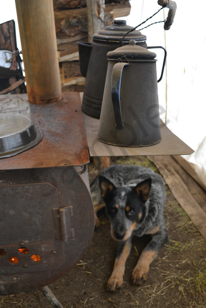 Photograph of a dog laying by a camp stove for sale as Fine Art