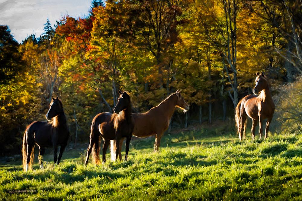 Mares - Catskills in Autumn