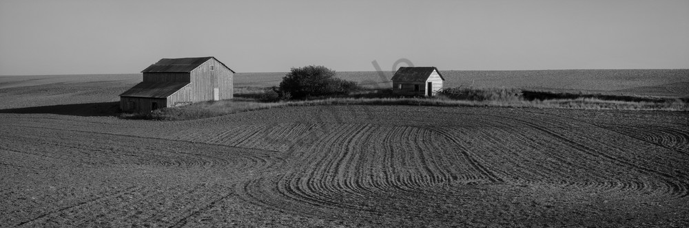 Black and White print of an old barn in a field.