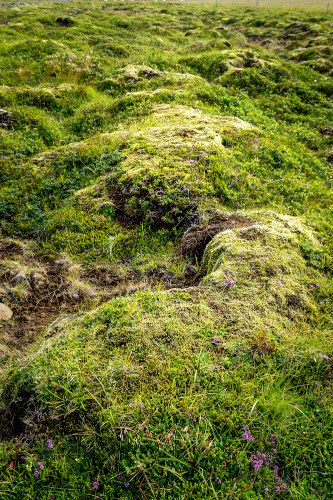 Moss, South Iceland