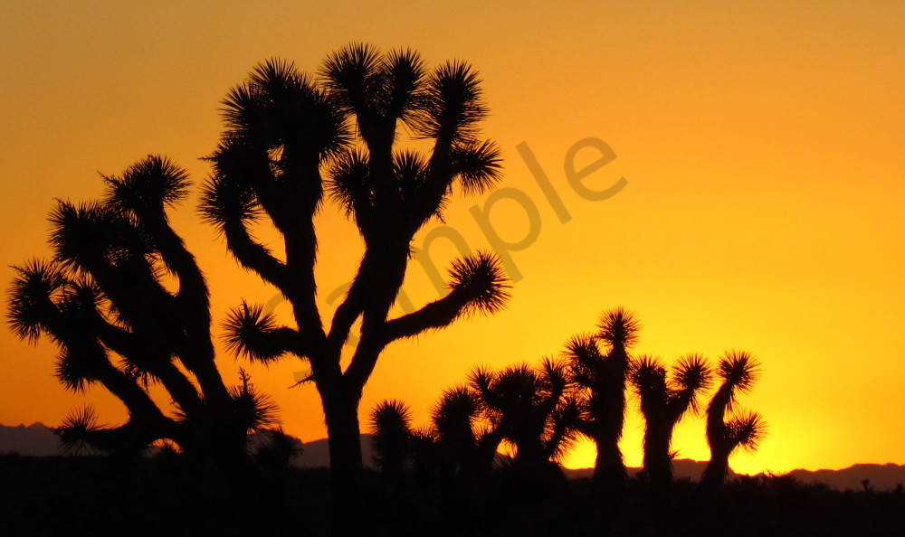 Joshua Tree Desert Sunset Landscapes
